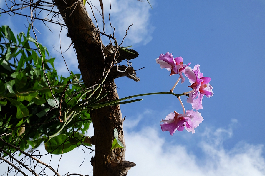 balenbouche estate gardens orchids
