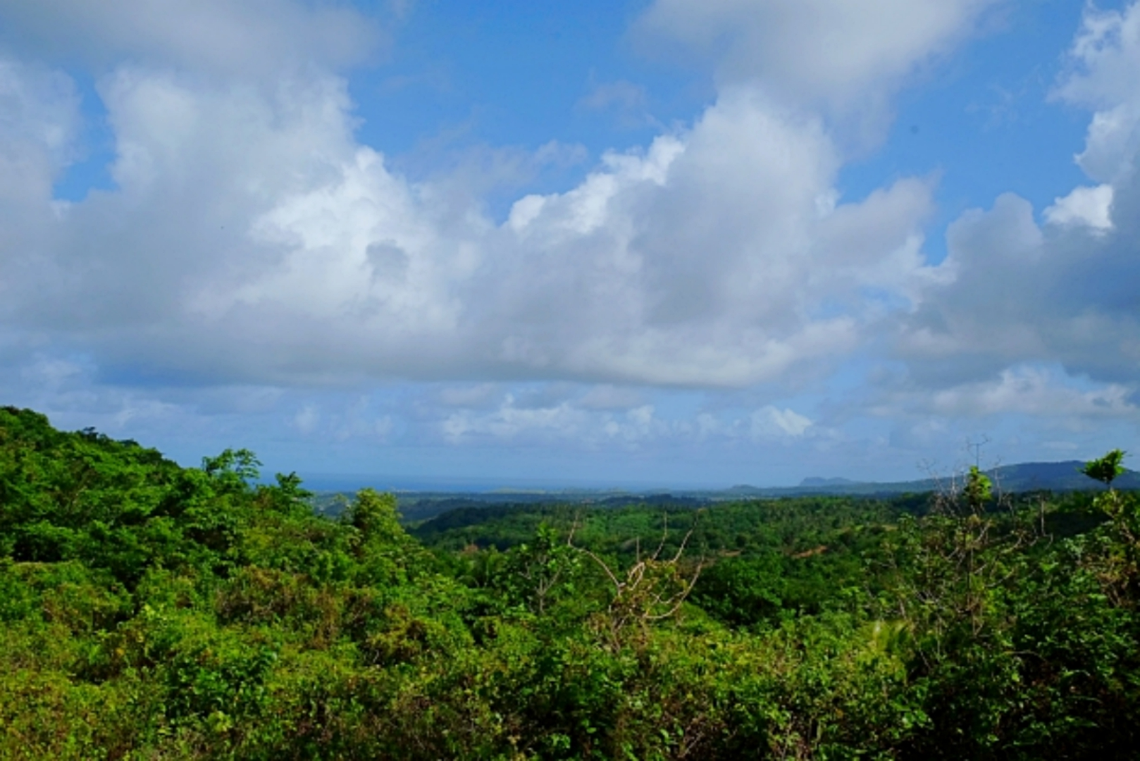 Rainforest Canopy Tours Eco Island Adventures