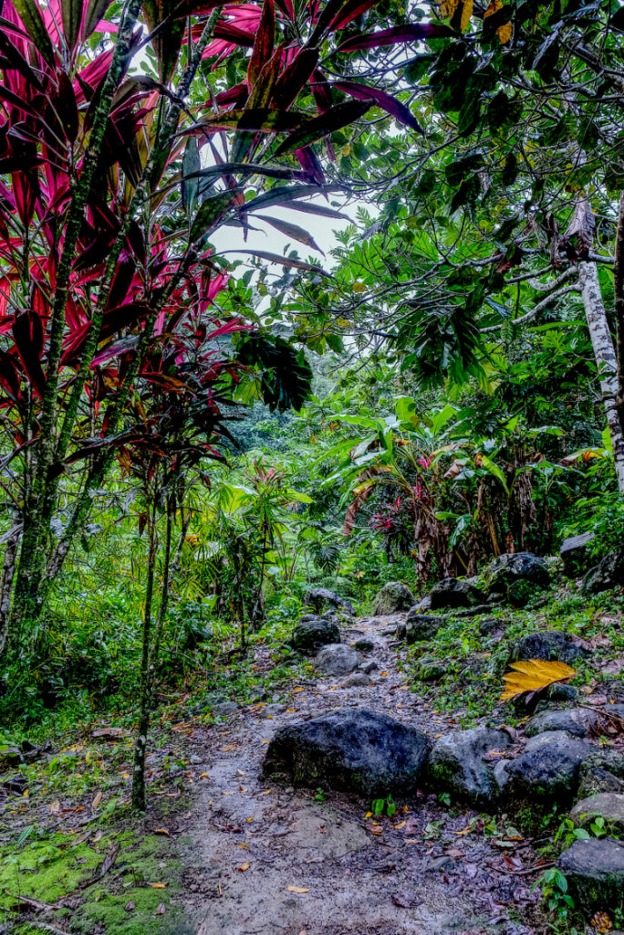 Forest Bathing along the path to the waterfall in anse la raye. explore st lucia - nature, outdoors, waterfalls and rivers