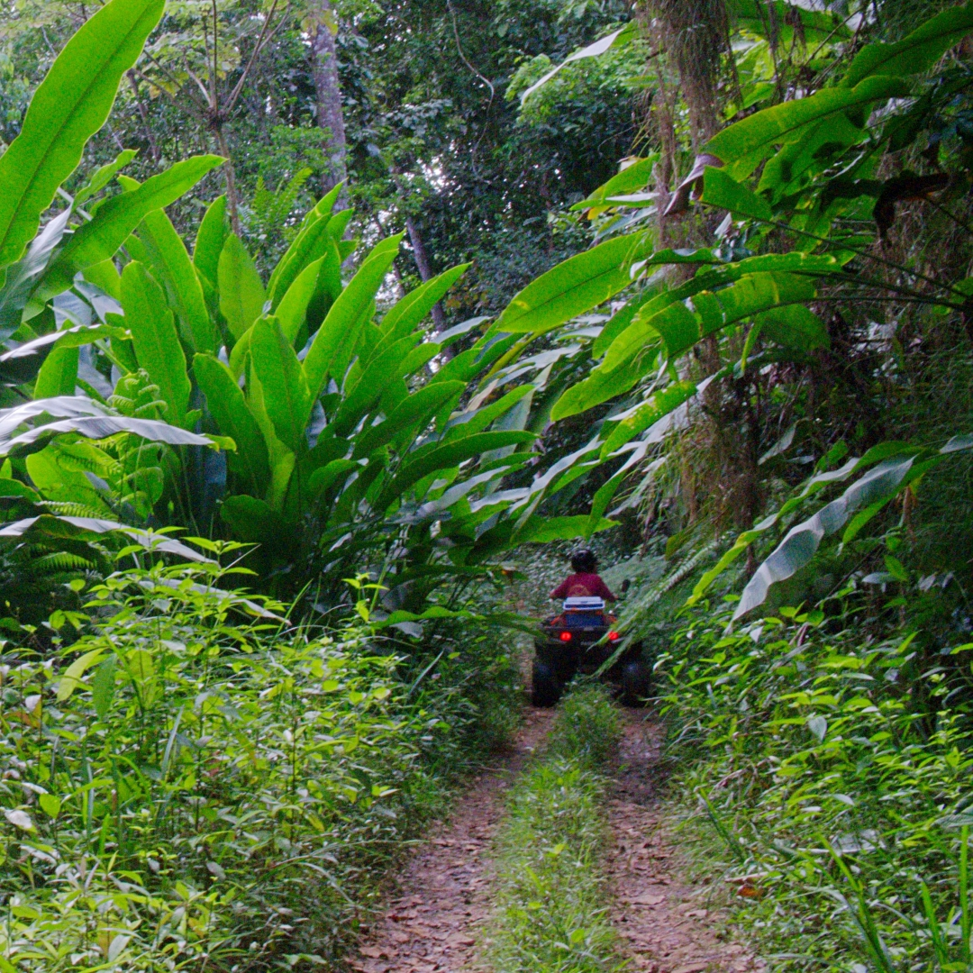 forest bathing what to do in Saint Lucia nature excursions
