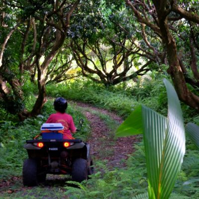 ATV Paradise Farm & Eco Tours at Fond Estate – forest bathing!