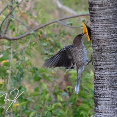 Saint lucia is full of rare birds -book a birdwatching tour, see birds on the beach, go hiking